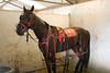 IMG_9078 horse