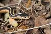 _MG_8382 snake