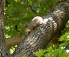 _MG_1901 squirrel g