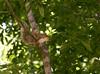 _MG_1904 cr squirrel g