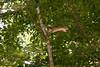 _MG_1906 squirrel jumping