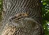_MG_1895 squirrel
