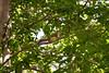 _MG_1910 squirrel g