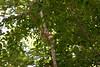_MG_1904 squirrel g