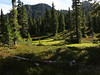 Typical olympic meadow on High Divide trail in the Olympic mountains