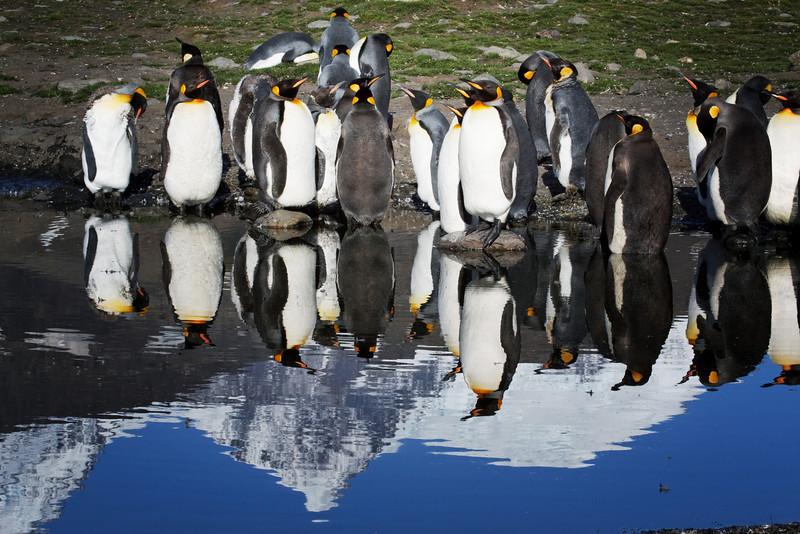Penguin mirror.
