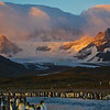 Sunrise on mountains, king penguin colony.