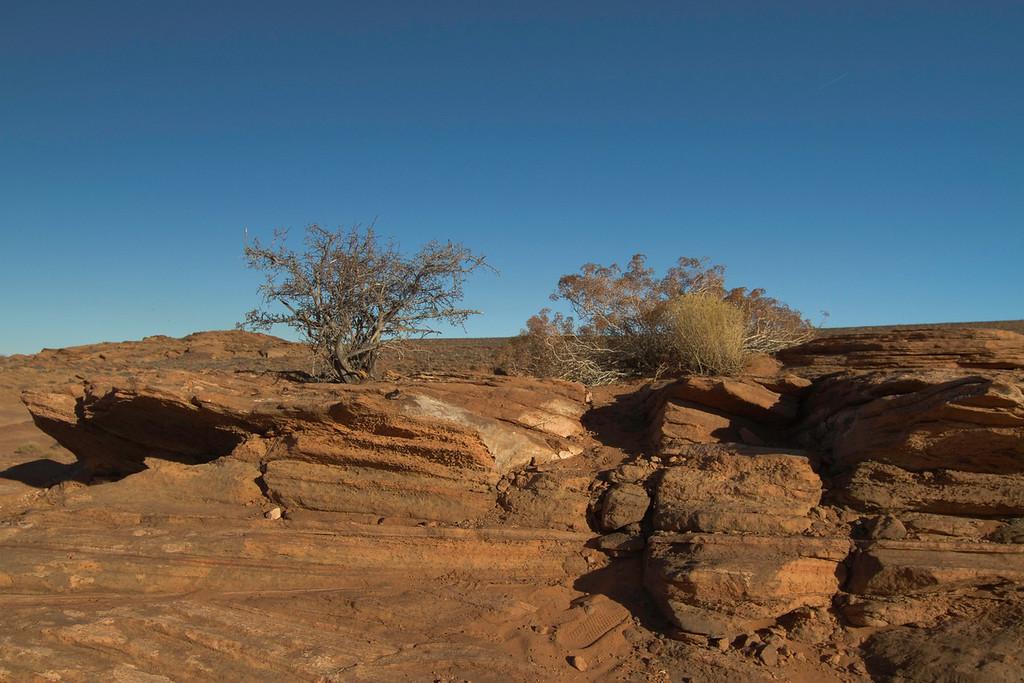 Landscape at Horseshoe Bend