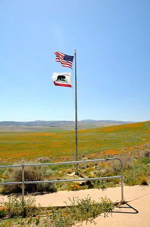 Antelope Valley California Poppy Reserve, April 2014