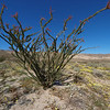 Ocotillo with red flowers in Coyote Canyon. E-3 & 7-14 mm @ 7 mm, f/11, 1/320, ISO 200