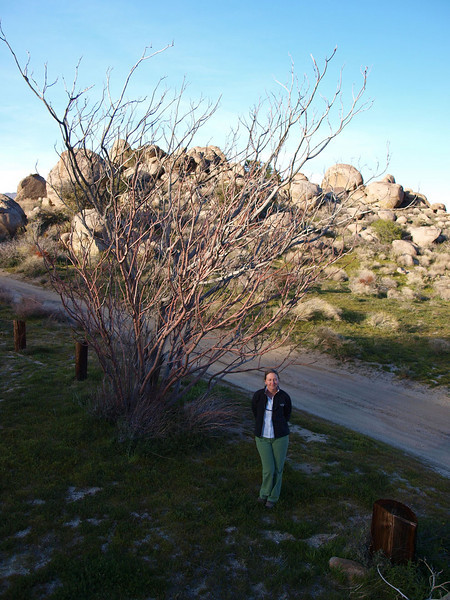Maggie at Pena Spring and Paroli Homesite, near Culp Canyon. Sunset in early March.