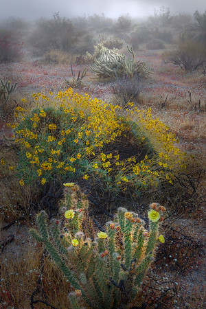 Anza Borrego State Park, March 2020, with the Rens