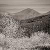 Ice-Coated Trees on Tar Jack Ridge