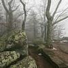 Appalachian Trail at Thunder Ridge