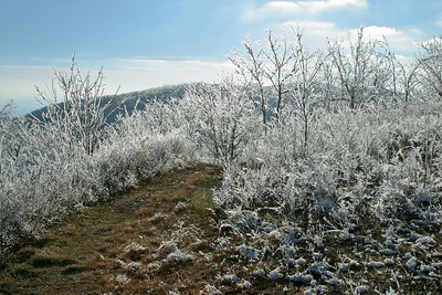 Rime Ice on the Appalachian Trail at Tar Jacket Ridge