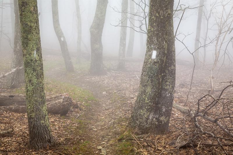 Fog on the Appalachian Trail near Thunder Hill