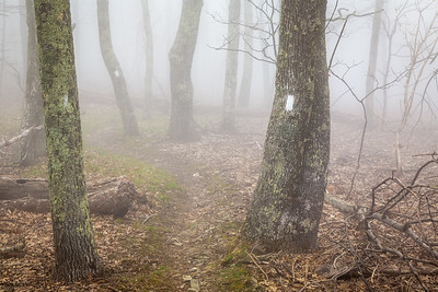 Fog on the Appalachian Trail near Thunder Hill