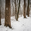 Winter on the Appalachian Trail in the James River Wilderness Area