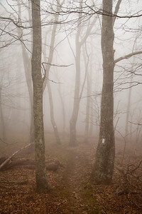 Morning Fog on the Appalachian Trail near Thunder Hill  where it intersects the Blue Ridge Parkway in Virginia. April 2010.