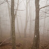Morning Fog on the Appalachian Trail near Thunder Hill