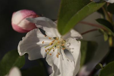 IMG_7309 Arboretum in bloom