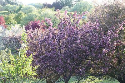 IMG_7318 Arboretum in bloom