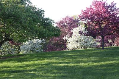 IMG_7298 Arboretum in bloom