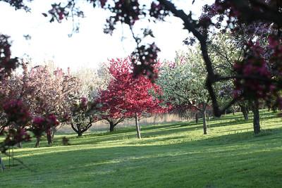 IMG_7312 Arboretum in bloom