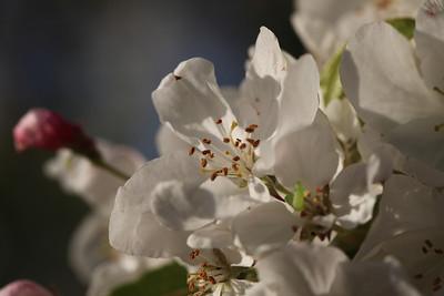 IMG_7306 Arboretum in bloom