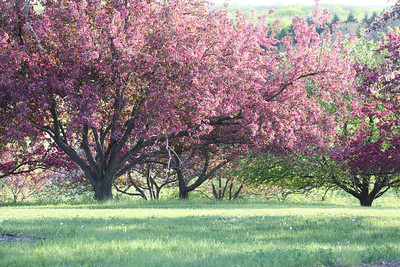 IMG_7317 Arboretum in bloom
