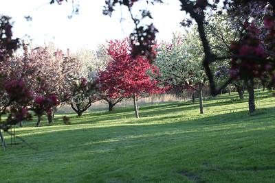 IMG_7311 Arboretum in bloom