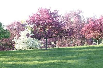 IMG_7300 Arboretum in bloom