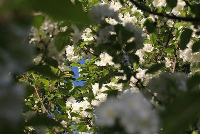 IMG_7314 Arboretum in bloom