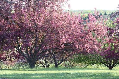 IMG_7316 Arboretum in bloom