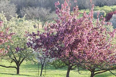 IMG_7320 Arboretum in bloom