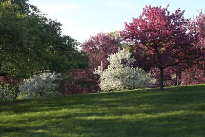 IMG_7299 Arboretum in bloom