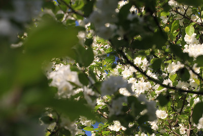 IMG_7315 Arboretum in bloom