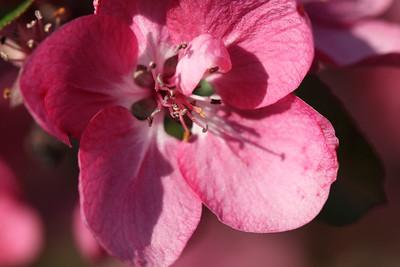 IMG_7301 Arboretum in bloom