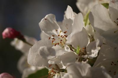 IMG_7307 Arboretum in bloom