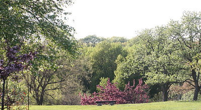 IMG_7297 Arboretum in bloom