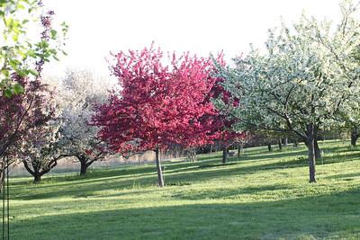 IMG_7313 Arboretum in bloom