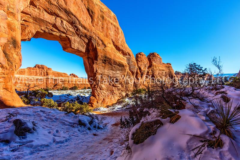 68.  Pine Tree Arch