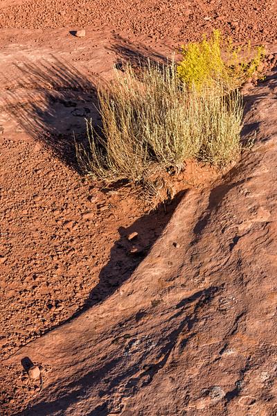 'Desert Wisp'