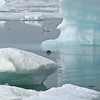 Arctic Scenes : Photos taken on the Chukchi Sea at Point Barrow, Alaska....250 miles north of the Arctic Circle.