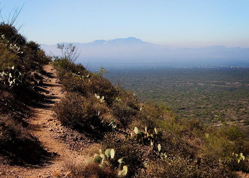 Arizona desert path