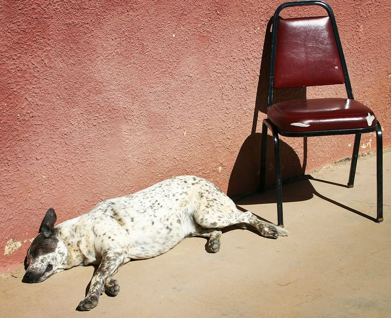 Old Saloon Dog Sleeping it off in the Arizona sun