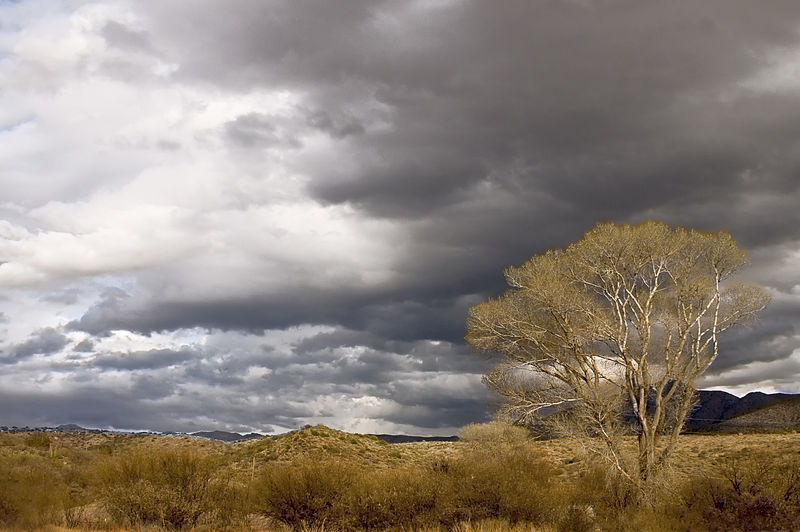Dark clouds over the desert Arizona