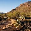 Evening light in the on the Arizona desert