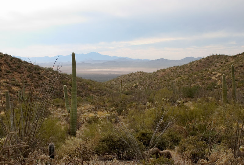 Cactus desert in Arizona with mountains in the distance