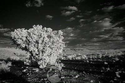 Raging Scrub  Infrared shot taken next to the Box Canyon ruins at Wupatki National Monument.